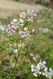 Flower& x27; s Lizenzfreies Stockbild