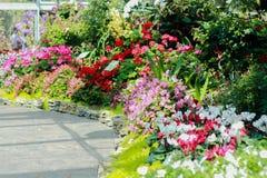 Flower's garden Stock Images