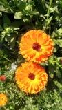 Flower&-x27; s piękno obrazy royalty free