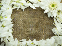 Flower on sack frame background. Flower on sack fram and copy space Royalty Free Stock Image