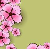 Flower sacura Royalty Free Stock Image