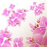 Flower sacura Stock Image