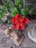 Flower Saint royalty free stock image