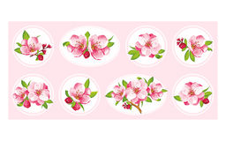 8 flower of Sakura blossom. VECTOR eps 10. Japanese flowering cherry in a various kind. It can be used for textile wallpaper, wedding invitation, mother's day or vector illustration