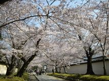 Spring Sakura in Kyoto, Japan stock photo