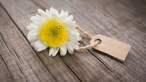 Flower with Sales Tag. Flowers with paper sales tag on wooden background Stock Photo
