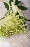 Flower of sambucus on wooden background. Royalty Free Stock Photos