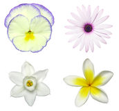 Flower Sampler. Spring flowers with clipping path royalty free stock photos