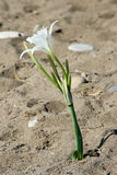 Flower in Sand Royalty Free Stock Photo