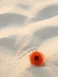 Flower on sand. Orange glowing flower on beach sand Royalty Free Stock Photos