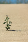 Flower in the sand. A lonely flower in the desert of sand stock image