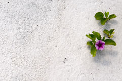Flower in the sand Stock Photography