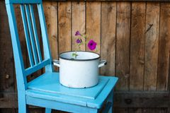 Flower in saucepan Stock Photo