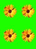 Flower scene. Abstract creative garden flower scene Royalty Free Stock Images
