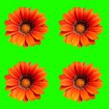 Flower scene. Abstract creative garden flower scene Stock Photo