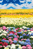 Flower scenery Stock Images