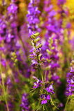 Flower. Scenery of flowers in beautiful day Stock Photography
