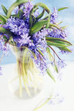 Flower scilla Stock Photos