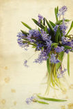 Flower scilla in vase, vintage Royalty Free Stock Images