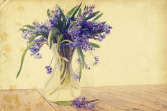 Flower scilla, vintage Stock Images
