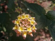 Flower. Sdr flower nature yellow pink stock photography