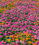 Flower sea colorful flowerbed Royalty Free Stock Photos