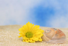 Flower and Sea Shell Royalty Free Stock Images