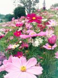 Flower sea in spring Royalty Free Stock Photography