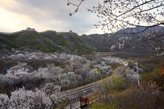 Flower sea and train S2 line, Beijing, China. The high speed train line S2 is a line running through Juyongguan Great Wall and flower forest. When in spring with stock photos