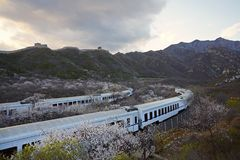 Flower sea and train S2 line, Beijing, China. The high speed train line S2 is a line running through Juyongguan Great Wall and flower forest. When in spring with royalty free stock photo