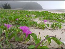 Flower, sea, violet, alone, Beach stock images
