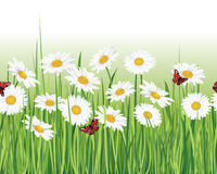 Flower seamless border on white background. Royalty Free Stock Images