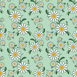 Flower seamless Pattern with Camomiles. Stock Photos