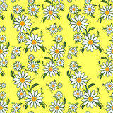 Flower seamless Pattern with Camomiles on yellow. Royalty Free Stock Images