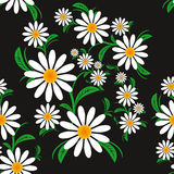 Flower seamless Pattern with Chamomiles on a black Stock Photography