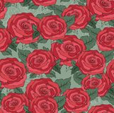 Flower of seamless pattern with red roses background Stock Photos