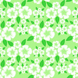 Flower seamless Pattern with white Flowers on green. Stock Photos