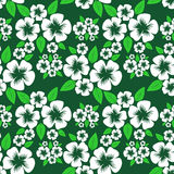 Flower seamless Pattern with white Flowers on green. Royalty Free Stock Photo