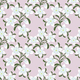 Flower seamless Wallpaper with white Flowers. Royalty Free Stock Photos