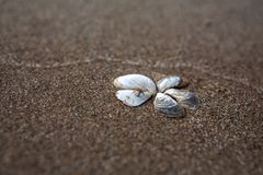 Flower of shells on the sand. Sand beach. Place for signature royalty free stock photos