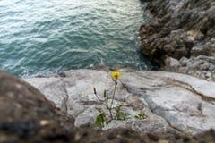 A flower  on the seashore Stock Photo
