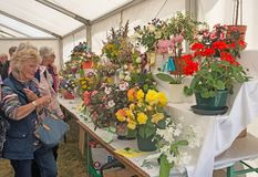 Flower section at Grantown-on-Spey show Stock Photography