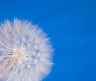 Flower Seed Ball royalty free stock photos