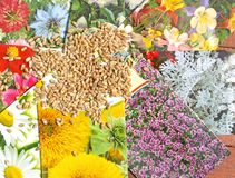 Flower seed mix Royalty Free Stock Images