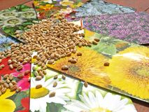 Flower seed mix Stock Image