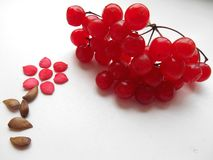 Flower of seed and red viburnum berries Stock Photos