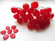Flower of seed and red viburnum berries Royalty Free Stock Image