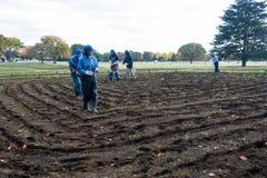 Flower seeding preparing planting Royalty Free Stock Image