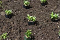 Flower Seedling Royalty Free Stock Image