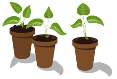 Flower seedlings Royalty Free Stock Photography